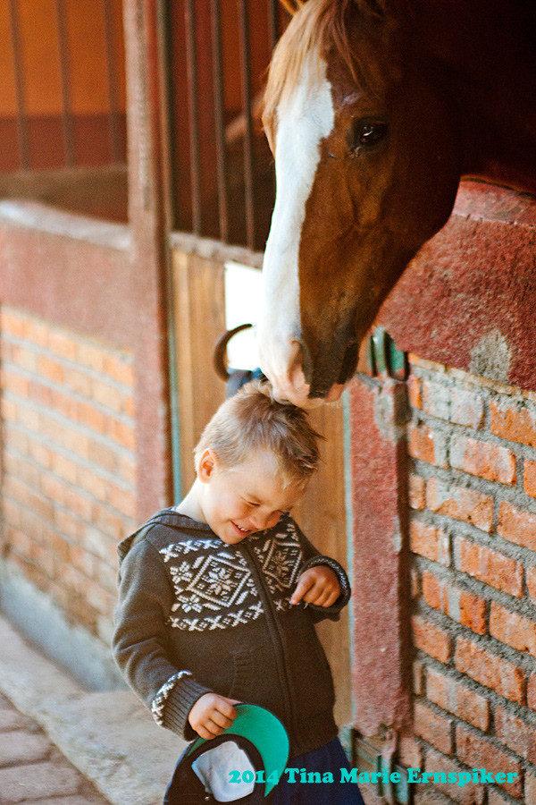 horses-of-morelia