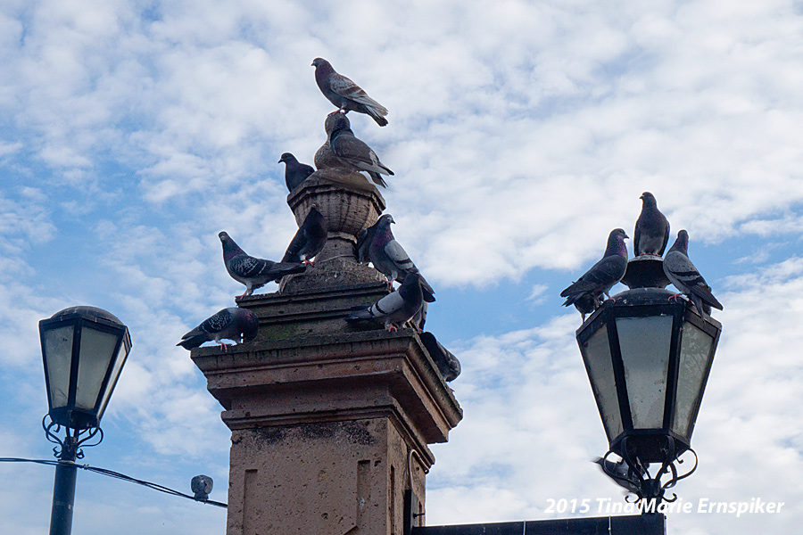 pigeons-downtown-morelia