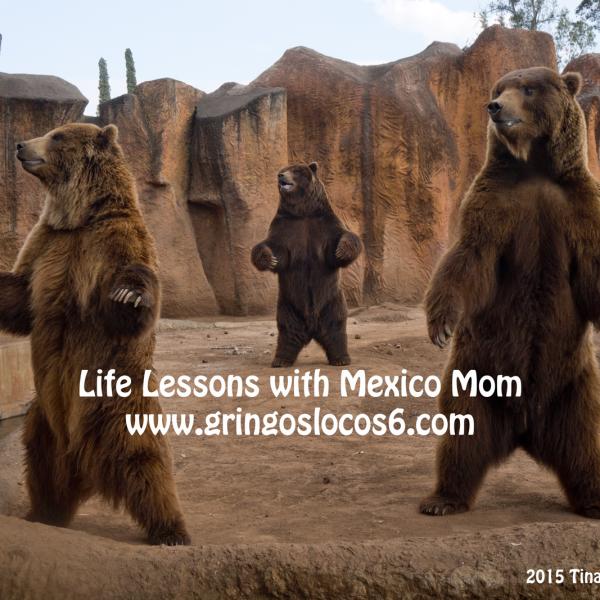 morelia-zoo-bears