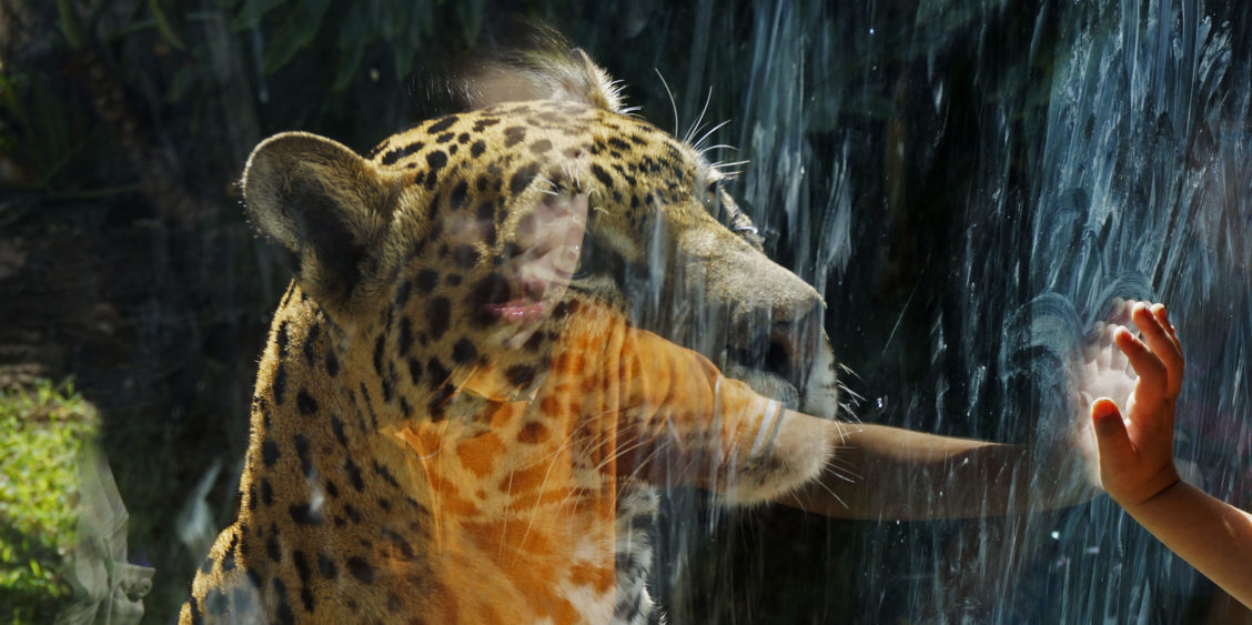 40-photos-that-will-make-you-want-to-visit-guadalajara-zoo