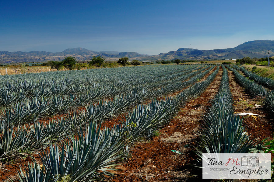 22 Sweet Photos of Tequila, Jalisco - the Mexican Town That Will Have You Thirsting for a Visit