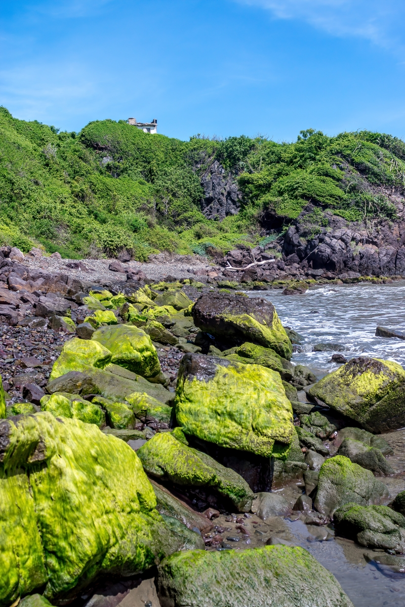 Green Moss Rocks On The Shore Print or Canvas Wall Art