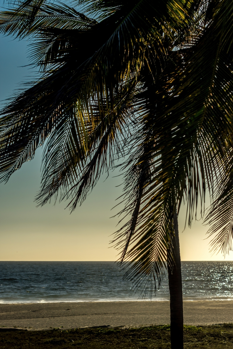 Palm Tree at Sunset Print or Canvas Wall Art