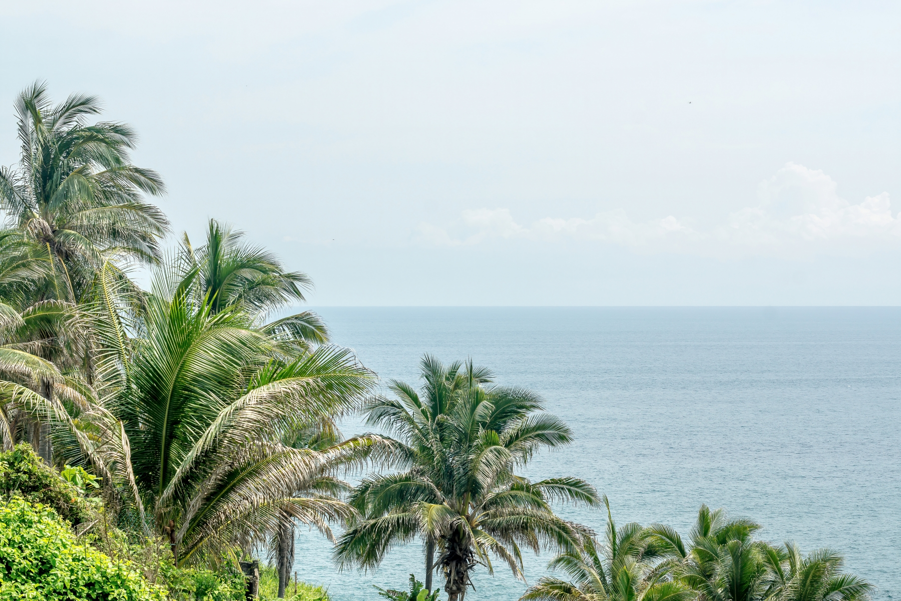 Palm Trees Overlooking The Ocean Print or Canvas Wall Art