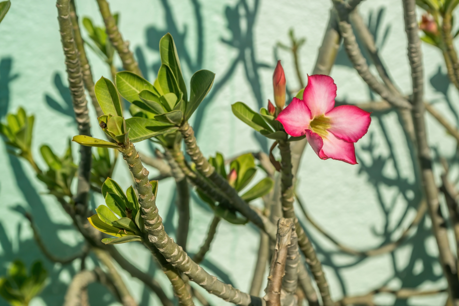 Pink-Tropical-Flower-and-Green-Foliage