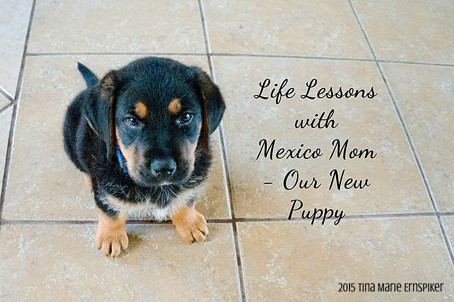 life-lessons-new-puppy